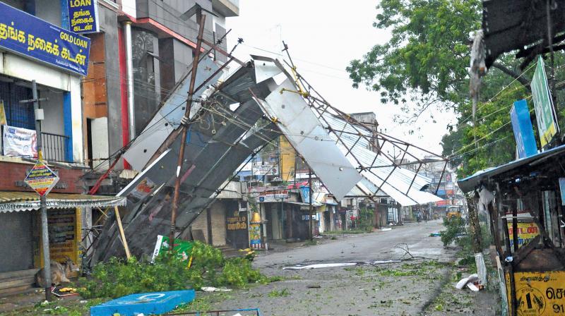 gaja cyclone affecting coconut க்கான பட முடிவு