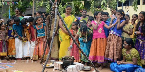 Image result for pongal festival