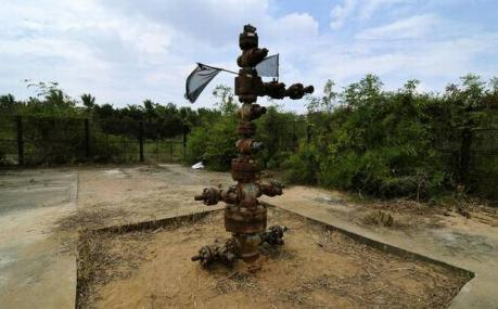 hydrocarbon plant க்கான பட முடிவு