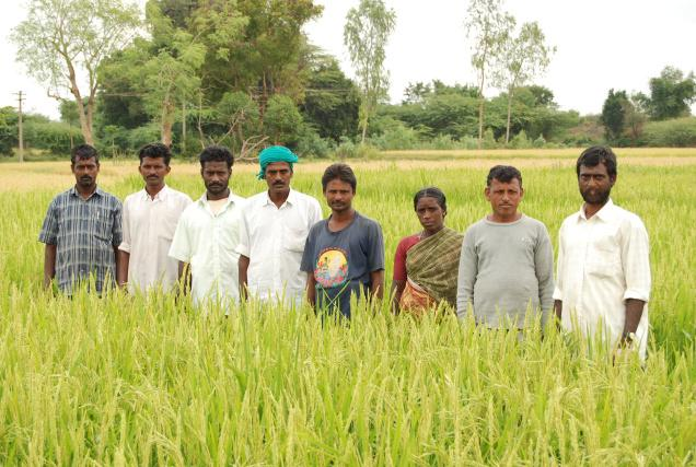 Image result for tamil farmers