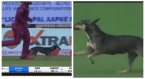 Dog entered into chepauk stadium