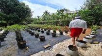 Malaiyala superstar Mohanlal organic farming in home