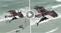 Eagle catching fish video goes viral