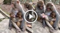Monkey spend time with its family viral video
