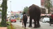 Elephant crosses dead dog on road viral video