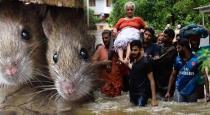 kerala affects through ratfever