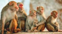 Monkeys killed 72 years old man in india