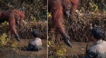 Orangutan Offers Helping Hand to Man Stuck in river