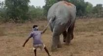 Man pull elephant tail video goes viral