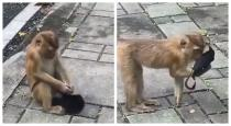 monkey-wear-mask-viral-video