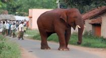 sinnaththampi-elephant-return-in-village