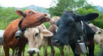 Akshay Kumar reveals he drinks cow urine everyday