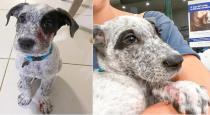 Women saved 9 months dog from rock snake viral video
