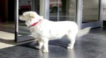Dog waited at hospital 6 days for its owner