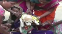 Boy marries dog near Odisha