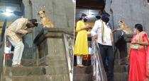 street-dog-bless-people-in-siddhivinayak-temple