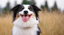 dog done yoga video viral