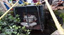 Man rescue leopard viral photos