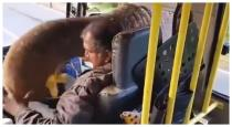 Elephant stops bus and take banana from bus viral video