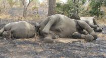 current shock - 7 elephants died