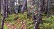 Breathing forest viral video