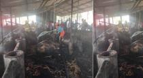 30 cows died in fire accident near Madurai