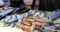 formalin-used-for-preserve-fish-in-madhurai-fish-market