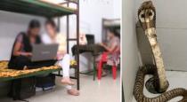 king-cobra-found-in-hostel-toilet