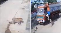 Lorry cleaner escape from cheetah in hydrabad