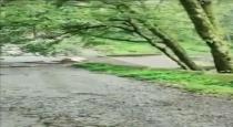 bridge-falldown-by-flood-in-uttarakanth