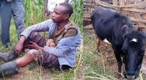 man sex abuse with cow in kenya