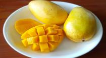 Foods should avoid after eating mango in tamil