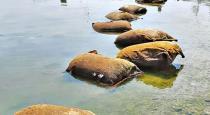 turmeric-bundles-found-on-sea-near-ramanathapuram
