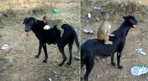 Monkey ride with dog video goes viral