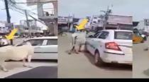 Cow delayed thasildhar for 30 mins