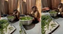Monkey helps women to cut vegetables viral video