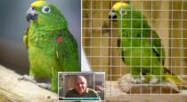 Parrot sings Beyonce song video leaves people amazed