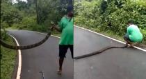 Youth catch king cobra viral video