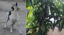 Dog helps to found cobra on tree