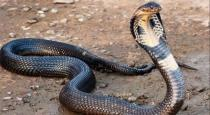 10 thousands people die in tamilnadu for snake bite per year