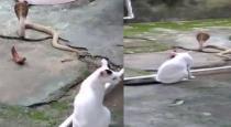 cat stopped snake