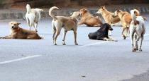 street dogs attacking young boy