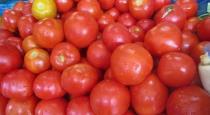modi thakkali - anthira farmer - good sales