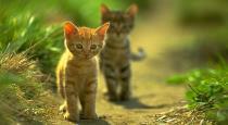 cat-crossing-road-is-bad-reason-in-tamil