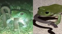 frog-swallow-snake-viral-video