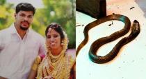 kerala-snake-bite-uthra-murder-case-update