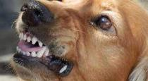 rabid dog bites 47 people