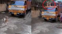 Goat jump on lorry viral video