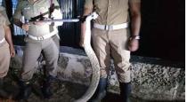 snake in shop