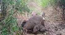 18-elephants-dead-in-assam